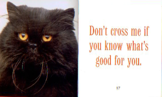Black cat with quote